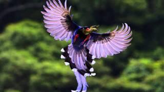 getlinkyoutube.com-Beautiful Birds 1