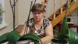 getlinkyoutube.com-Как приручить Строптивую Орхидею?