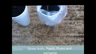 getlinkyoutube.com-Tropical fruits , Mangosteen, Longan, Dragonfruit..(Grenada 3)