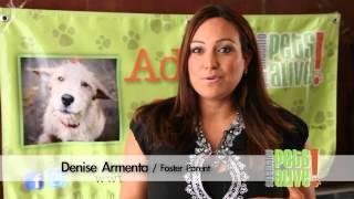 SAPA - San Antonio Pets ALive !
