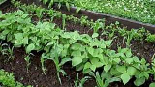 getlinkyoutube.com-Unexpected side effects of Compost Tea