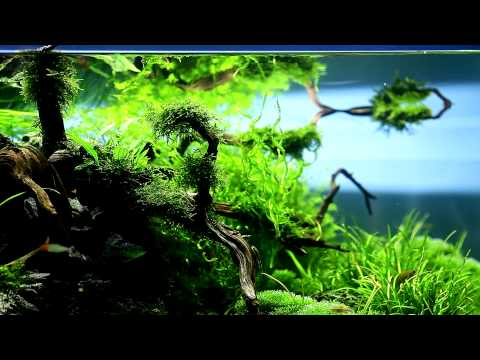 120cm Nature Aquarium by Mark Evans