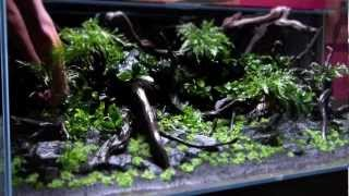 "Teil 1: Diskus Aquascape ""River Side"" by Adrie Baumann von Aquascaping Symphony"