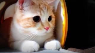 bercanda sama kucing lucu