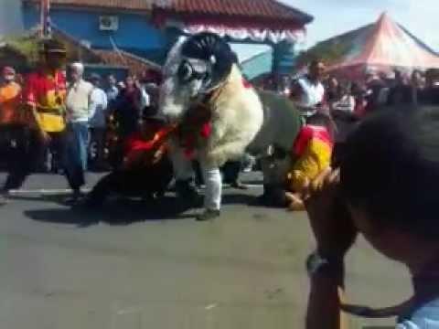 Raja Domba Garut.3gp