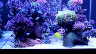 getlinkyoutube.com-My Coral Garden