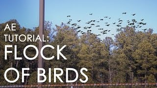 getlinkyoutube.com-How to make a flock of startled birds - After Effects Tutorial