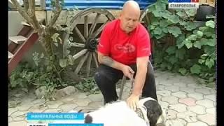 getlinkyoutube.com-Собака с мировым именем живет на Ставрополье