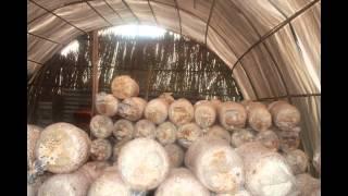 getlinkyoutube.com-YPARD Nepal Mushroom Project