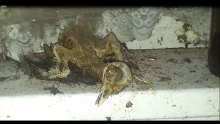 Abandoned farmhouse with dead animals