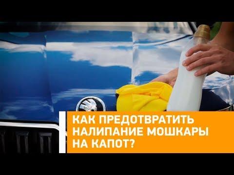Лайфхак: как предотвратить налипание мошкары на капот? Минтранс.