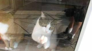 getlinkyoutube.com-My Cat Wants to Go Outside
