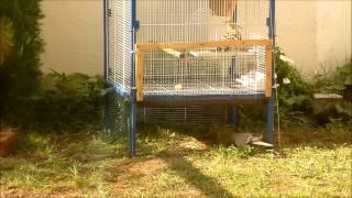 getlinkyoutube.com-how to catch a pigeon كيف تصيد يمامه.camera refat shehadeh