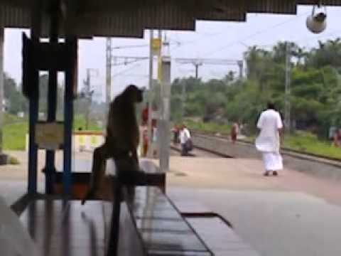 A FUNNY MONKEY IN RAIL PLATFORM