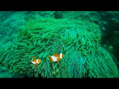 Nemo Stop Clowning Around - Manado, North Sulawesi
