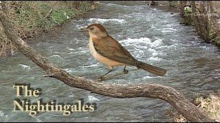 The Nightingales  Sokobanja Ostala si uvek ista