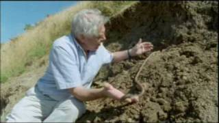 getlinkyoutube.com-The Giant Earthworm