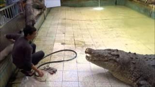 getlinkyoutube.com-~大鱷魚吃早餐~