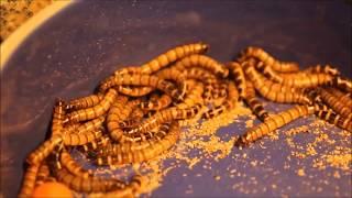 getlinkyoutube.com-I fear Holes and Worms!