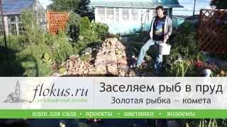 getlinkyoutube.com-Заселяем рыб в пруд  Золотая рыбка — комета (видео)