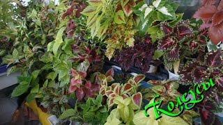 getlinkyoutube.com-Комнатные растения на балконе июль