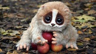 getlinkyoutube.com-8 Cute Animals That Can Kill You