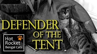getlinkyoutube.com-The Trouble with Tents – Bengal cats playing & hiding