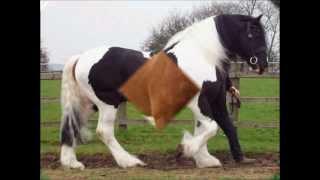 getlinkyoutube.com-los caballos 8 ♥  Percherones