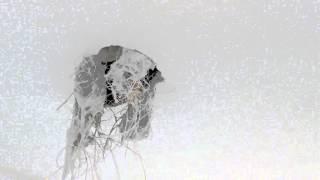 getlinkyoutube.com-Cómo tapar un agujero en un techo de escayola