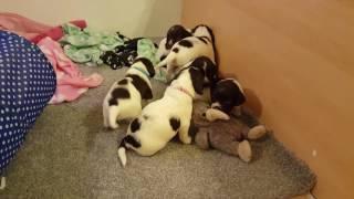 Puppy play.