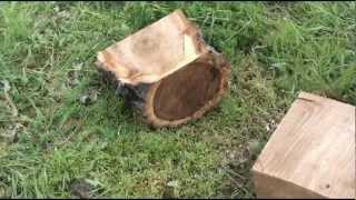 getlinkyoutube.com-Как извлекают из земли корни спиленного дерева