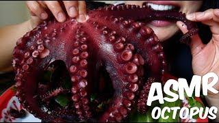 ASMR GIANT OCTOPUS ปลาหมึกยักษ์ (CHEWY EATING SOUNDS) No Talking   SAS-ASMR