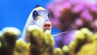 Stop a Fish from Chasing Its Tank Mates   Aquarium Care