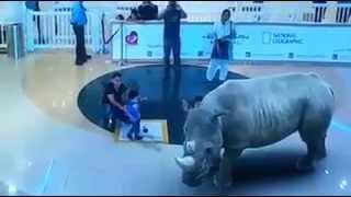 getlinkyoutube.com-7D Laser Animal Show at Dubai Mall