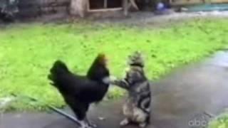 getlinkyoutube.com-Gatos malucos!