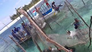 Pelepasan ikan duyung