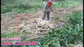 getlinkyoutube.com-ผานยกร่อง ผานขุดมันสำปะหลัง Thailand's best cassava harvester