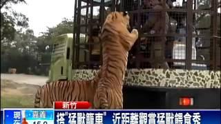 getlinkyoutube.com-遊客搭「猛獸籠車」 獅虎成群包圍-民視新聞