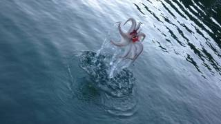 getlinkyoutube.com-Ψάρεμα χταποδιού. δοκιμάζοντας χωρίς απόχη τα αγκίστρια του ψεύτικου κάβουρα. (octopus fishing)