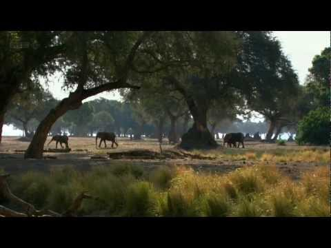 Natural World BBC HD 720p 2012