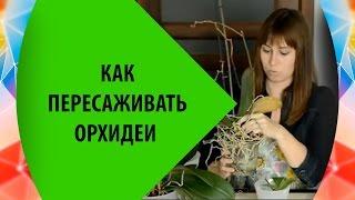 getlinkyoutube.com-Как пересаживать орхидеи
