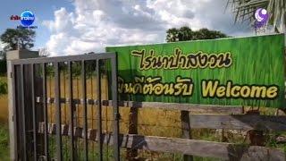 getlinkyoutube.com-วิถีปอ ทฤษฎี พระเอกดังกับชีวิตพอเพียงที่บ้านเกิด | สำนักข่าวไทย อสมท