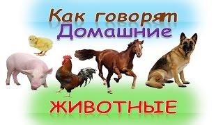 """getlinkyoutube.com-Развивающий мультик для детей """"Как говорят домашние животные""""(кто как делает)Как говорят животные"""