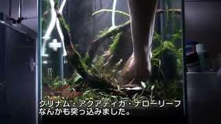 getlinkyoutube.com-小型でジャングルな水槽を立ち上げてみた