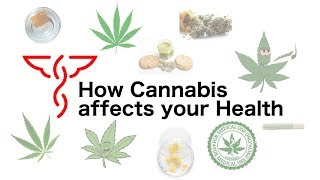 How Cannabis affects your Health - Episode 5