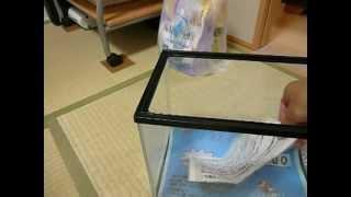 getlinkyoutube.com-初めての海水魚飼育【30cm水槽】