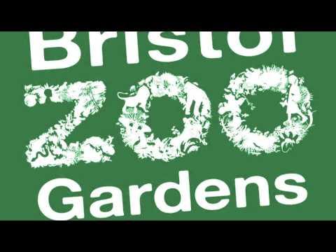 Music - Bristol Zoo video