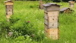 getlinkyoutube.com-Роение пчёл