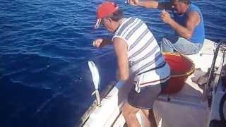getlinkyoutube.com-ΧΟΝΤΡΟ ΠΑΡΑΓΑΔΙ (psarema me xontro paragadi afrou)