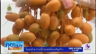 getlinkyoutube.com-ครูเกษียณราชบุรีปลูกอินทผลัมในบ้าน ออกลูกดกเก็บขายได้หลายหมื่น